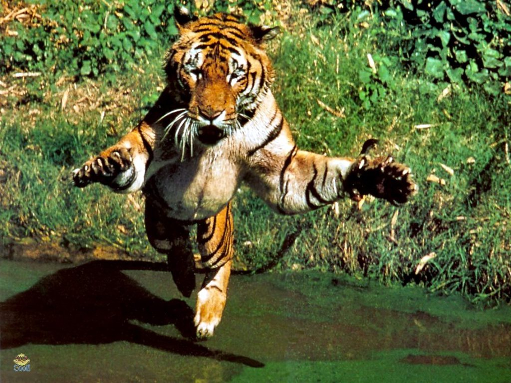 Read more about the article Tiger Tales